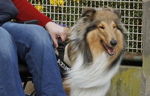miramigo-hundeakademie-lpf-assistenzhund-start