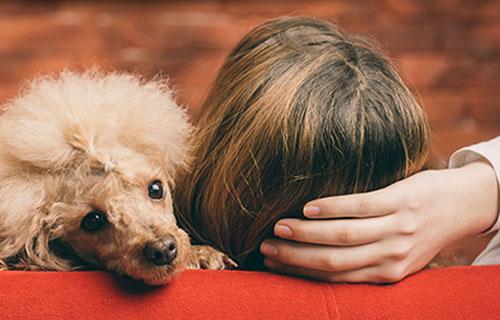 miramigo-hundeakademie-signalhund-start