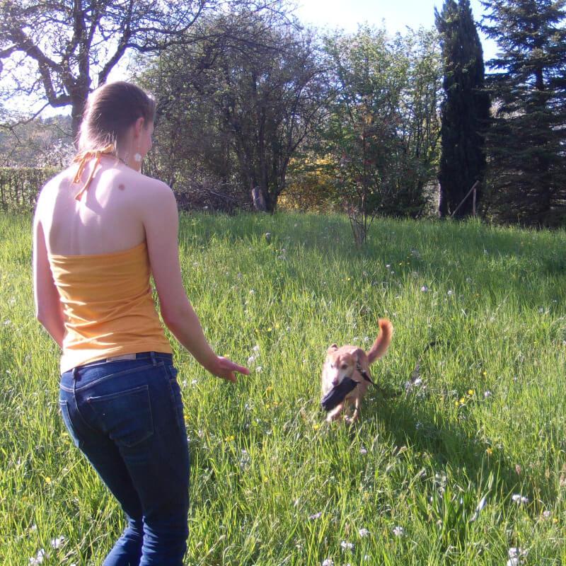 Hundetraining bei Verhaltensproblemen