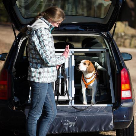 Beagel übt das Warten vor dem Herausspringen aus der Autohundetransportbox - Einzelcoaching in Kernen