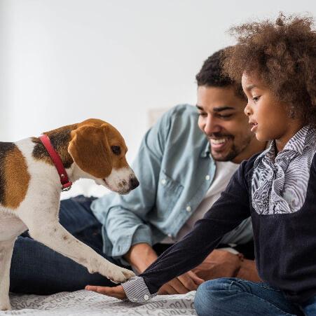 Ein Mädchen trainiert mit ihrem Beagle - Einzelcoaching zur Gewöhnung des Hundes an Kinder.