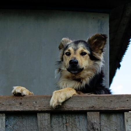 Hund schaut über einen Gartenzaun und lernt im Hundetraining als Einzelcoaching entspannt alleine zu Hause zu bleiben.