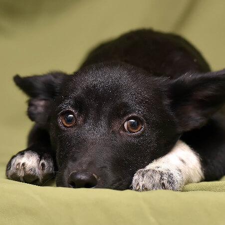Dachshundmischling liegt ängstlich auf dem Boden und soll im Hundetraining als Einzelcoaching lernen seine Angst zu überwinden.