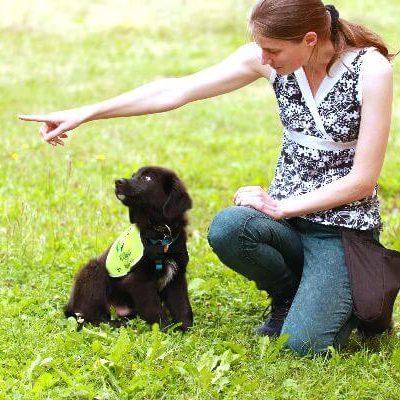 welpe_siru_wird_von_katharina_thum_im_assistenzhundtraining_mit_einem_handzeichen_zum_apportieren_geschickt.