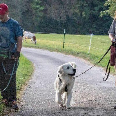 Assistenzhundazubi Sam ignoriert den andern Hund und hält beim Vorbeilaufen Blickkontakt zu seinem Menschen.
