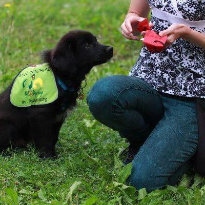 Assistenzhundwelpe Siru bekommt im Training eine Futterbelohnung aus dem Futterbeutel.